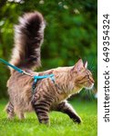 black tabby maine coon cat with ... | Shutterstock . vector #649354324