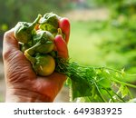 thai native vegetables | Shutterstock . vector #649383925