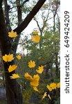 falling big maple leaves in... | Shutterstock . vector #649424209