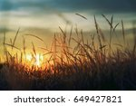 grass background with sun beam.... | Shutterstock . vector #649427821