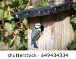 Close Up Of A Blue Tit At A...