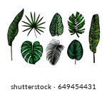 tropical leaves collection.... | Shutterstock .eps vector #649454431