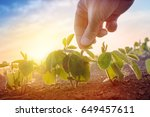 farmer working in soybean field ... | Shutterstock . vector #649457611