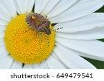 Bug Springs On The Flower