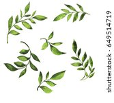 set of green fresh branches... | Shutterstock . vector #649514719