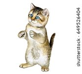 Stock photo the british kitten sits on its hind legs a kitten is isolated on a scrap background watercolor 649526404
