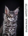 beautiful and cute kitten maine ... | Shutterstock . vector #649537759