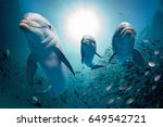 Dolphin Family Underwater On...