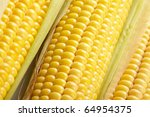 fresh corn vegetable | Shutterstock . vector #64954375