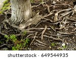 The Roots Of This Tree Sprawls...