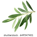 branch with olive leaves... | Shutterstock . vector #649547401