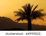 sunset and a palm tree  palm...   Shutterstock . vector #64955023