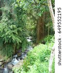 Small photo of Small river in the middle of the foliage, Bali, Indonésia.