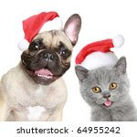 Stock photo french bulldog and kitten in red christmas cap on a white background 64955242