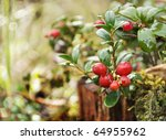 Uncultivated Forest Cranberrie...