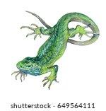 Watercolor Single Lizard ...