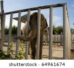 Elephant In The Zoo Behind The...