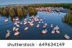 white pelicans  pelecanus... | Shutterstock . vector #649634149