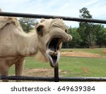 Camel With Its Mouth Open