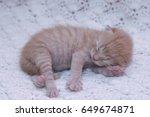 Stock photo small ginger cat kitten kitten sleeping domestic cat newborn kitten orange kitten one week old 649674871