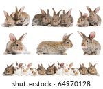 Stock photo set of young baby light brown rabbits with long ears isolated on white 64970128
