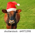 Grazing cow in a Santas hat. - stock photo