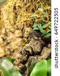 bumble bee poison dart frog...   Shutterstock . vector #649722505