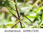 Large Dragonfly Close Up. A...