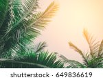 copy space of tropical palm... | Shutterstock . vector #649836619