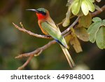 The Red Throated Bee Eater ...