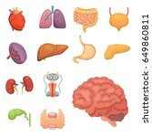 cartoon human organs set.... | Shutterstock .eps vector #649860811