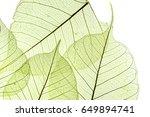 a leaf texture close up | Shutterstock . vector #649894741