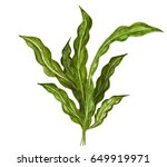 watercolor green sea weed close ... | Shutterstock . vector #649919971