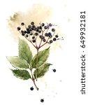 watercolor vintage botanical... | Shutterstock . vector #649932181