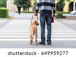 guide dog is helping a blind... | Shutterstock . vector #649959277