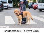 guide dog is helping a blind... | Shutterstock . vector #649959301