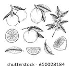 hand drawn vector illustration  ... | Shutterstock .eps vector #650028184