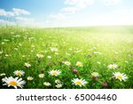 field of wild flowers | Shutterstock . vector #65004460