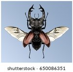 stag beetle with open wings... | Shutterstock . vector #650086351