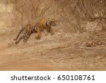 tiger cub in the nature habitat....   Shutterstock . vector #650108761