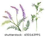 hand drawn floral set....   Shutterstock . vector #650163991
