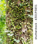 Small photo of Epiphyte on tree in green tropical garden show business concept of dependency, support, and relaxation