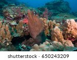 moray eel cleaner fish | Shutterstock . vector #650243209