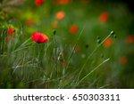 flowers background | Shutterstock . vector #650303311