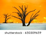 dead camelthorn trees and red... | Shutterstock . vector #650309659