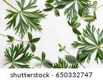 green leaves on white... | Shutterstock . vector #650332747