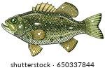 largemouth bass | Shutterstock .eps vector #650337844