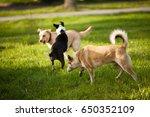 three dogs walking on green...   Shutterstock . vector #650352109