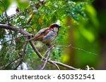 outdoors background | Shutterstock . vector #650352541
