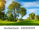 sunny park with long shadows | Shutterstock . vector #650355559